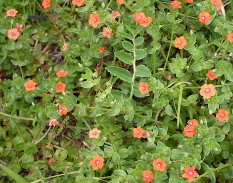 Identifying Common Garden Weeds Weedicide