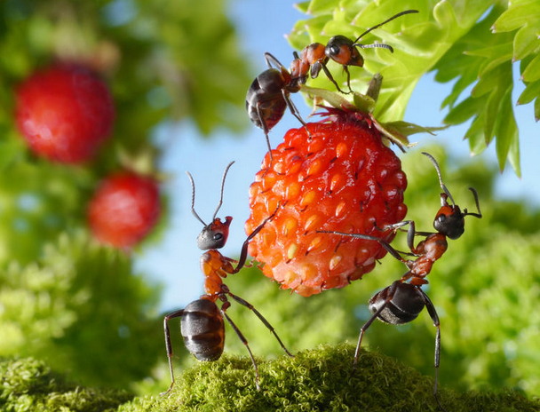 how-to-get-rid-of-ants-garden