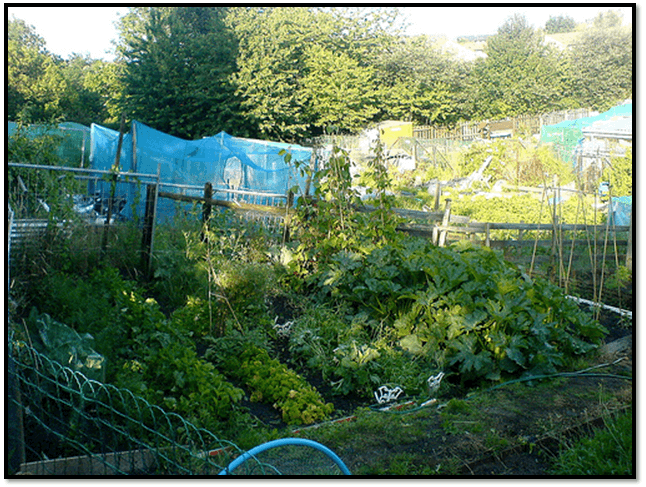 allotment-best-way-clear-weeds