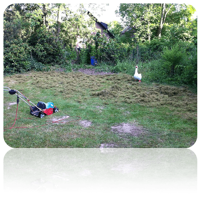 Best Lawn Scarifier Electric Petrol Or Manual Weedicide