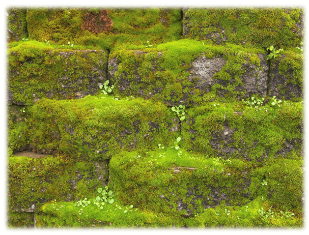 best-moss-killer-block-pavement