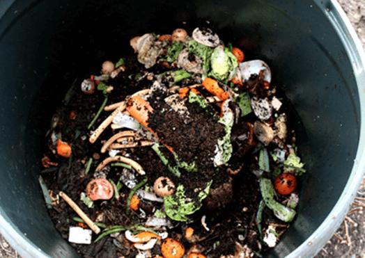 compost-dead-weeds