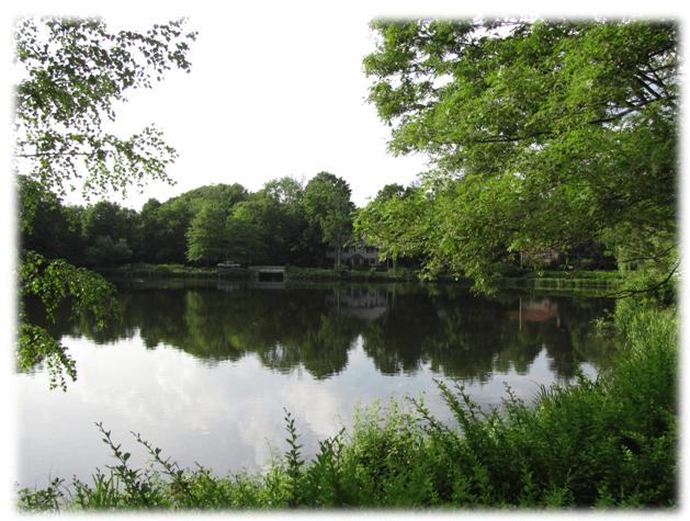 pond-blanket-weed