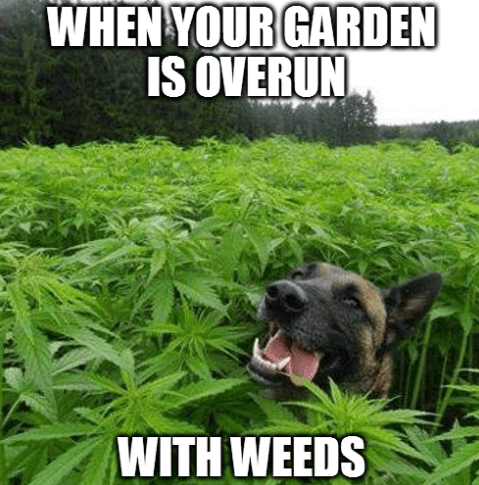 5 Gardening Memes to get You Smiling and Laughing , Weedicide