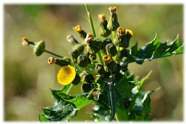 weeds-pathway-identify